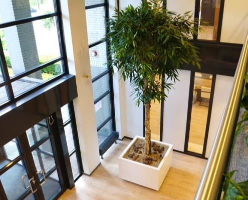 Interieurontwerp beplanting kantoorpand